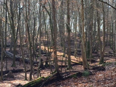 foret d arbres