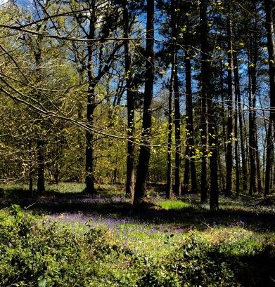 fleurs sous bois