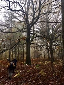 sous-bois-arbres