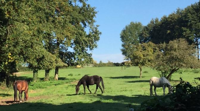 Crécy, horses et randonneuses font leur show dans le Val de Marne.
