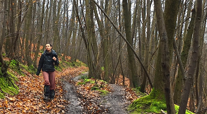 Courte rando-découverte de la forêt de Montmorency (95)