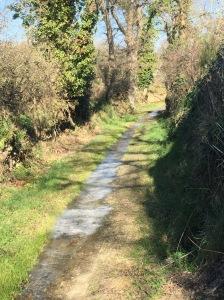 sentier gele dans le Morbihan, rando GR 34