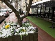 fleurs sous la neige a Paris