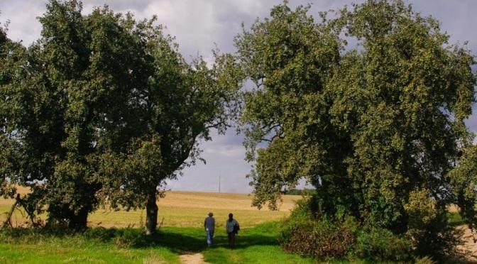 Rando IDF «spécial grèves SNCF»  : St Chéron-Lardy (91) – 20 km