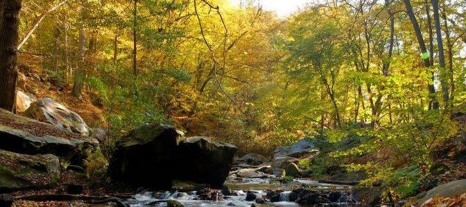 Idée randonnée : La boucle des lacs de Rambouillet (25 km)
