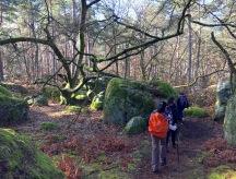 couleurs de Fontainebleau:optimisation-image-wordpress-google-taille