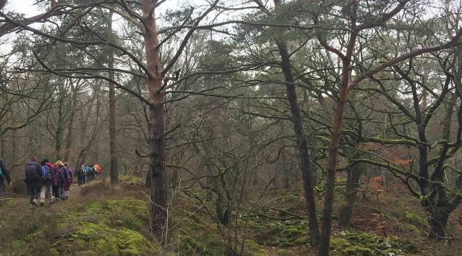 Evasion  végétale à Fontainebleau en hiver